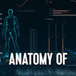Anatomy of
