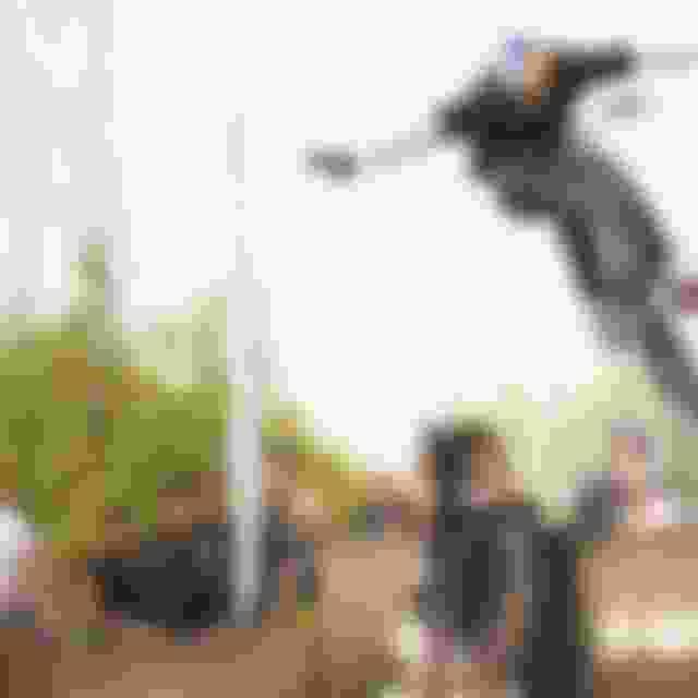 【東京オリンピック出場枠の争い】BMX・MTB:BMXパークの中村輪夢、BMXレースの丹野夏波が日本代表に?