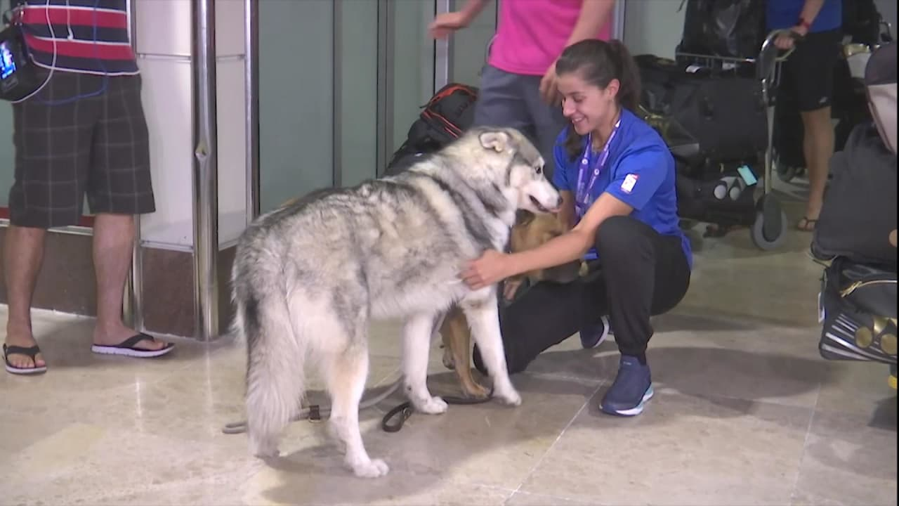 Four-legged friends greet World Champ Carolina Marin on her homecoming