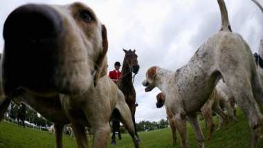 Hounds and horses - A stable relationship