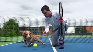 Cães em treinamento para serem coletores de bola no torneio de Londres!