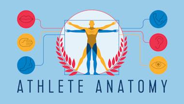 Anatomie eines Athleten