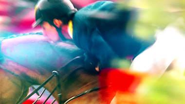 Final 5-year-old horses | FEI World Breeding Dressage Championship - Ermelo